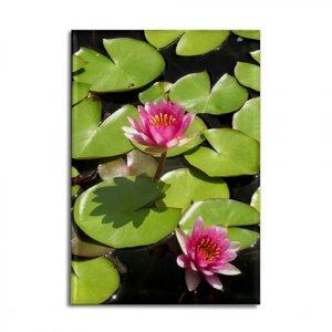 Pink Lotus Flowers Magnet