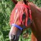 Equine Fly Control Fly Horse Fringe