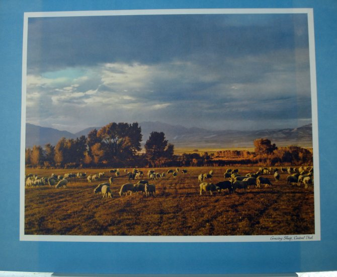 Grazing Sheep central Utah Standard Oil Co print photo Dick McGraw mid 20th C vintage AL1718