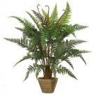 Leather Fern Silk Plant