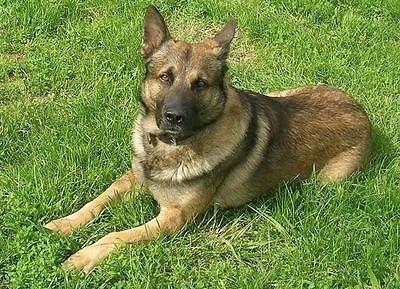Bergan Universal Travel Mesh Front Seat Dog Barrier Pets SUV Car Van BER-88115