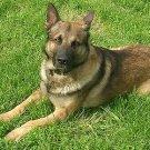 Dog Cat Collar with Bandana 81-18 Mirage Pets 10 inches Dark Green Camo Collar