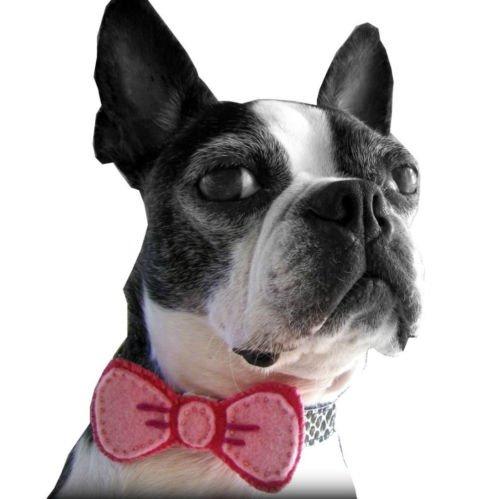 Dog Collar Bow- Pet Collar Attachment (MORE COLORS)