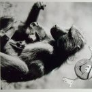 Monkey Business and Other Family Fun 1997 photo 8x10 national geographic