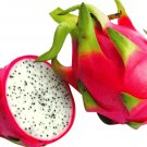 Dragon Fruit SS1