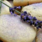Lavender Sugar Cookie SB