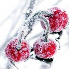 Cherries In The Snow OH
