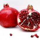 Pomegranate SS2