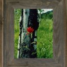 12 X 16 Wide Western Picture Rustic Frames with Plexiglas