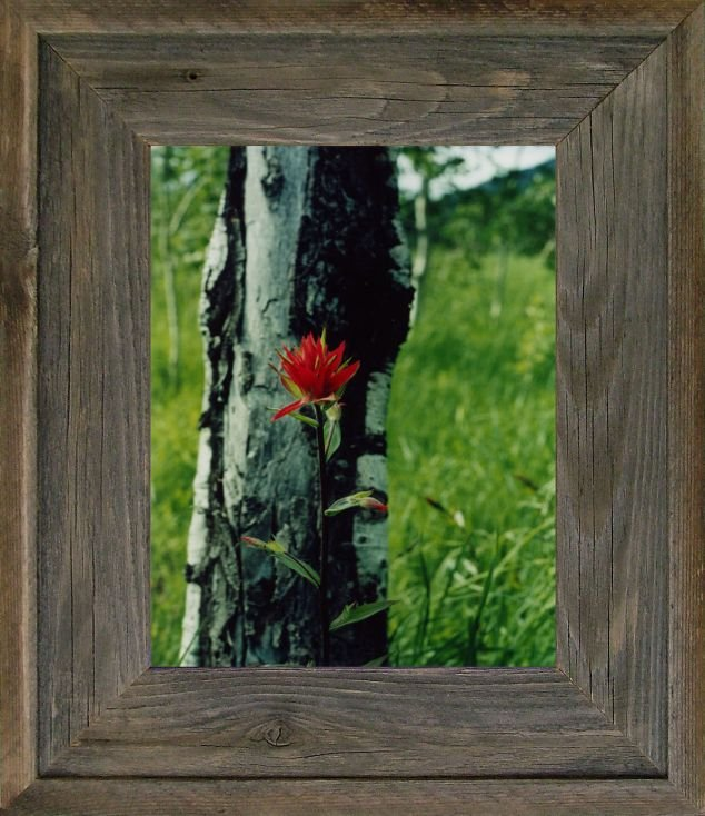 20 x 30 wide western picture rustic frames with plexiglas. Black Bedroom Furniture Sets. Home Design Ideas