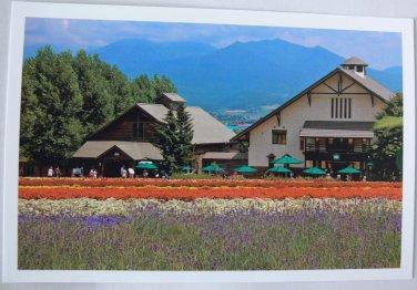 Postcard House Restaurant Flower Garden White Orange Purple Yellow Beautiful