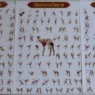 Muay Thai Kick Boxing MMA Martial Art Muaythai Kickboxing Kickboxen Boksen Boks Boksa Gift 3 Poster