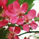 Flowers Fine Art Photo II 8x10