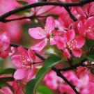 Flowers Fine Art Photo 8x10