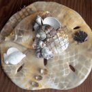 Tan Sand Dollar Wall Plaque with Pearl finish