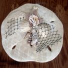 Sand Dollar Wall Plaque White Pearl