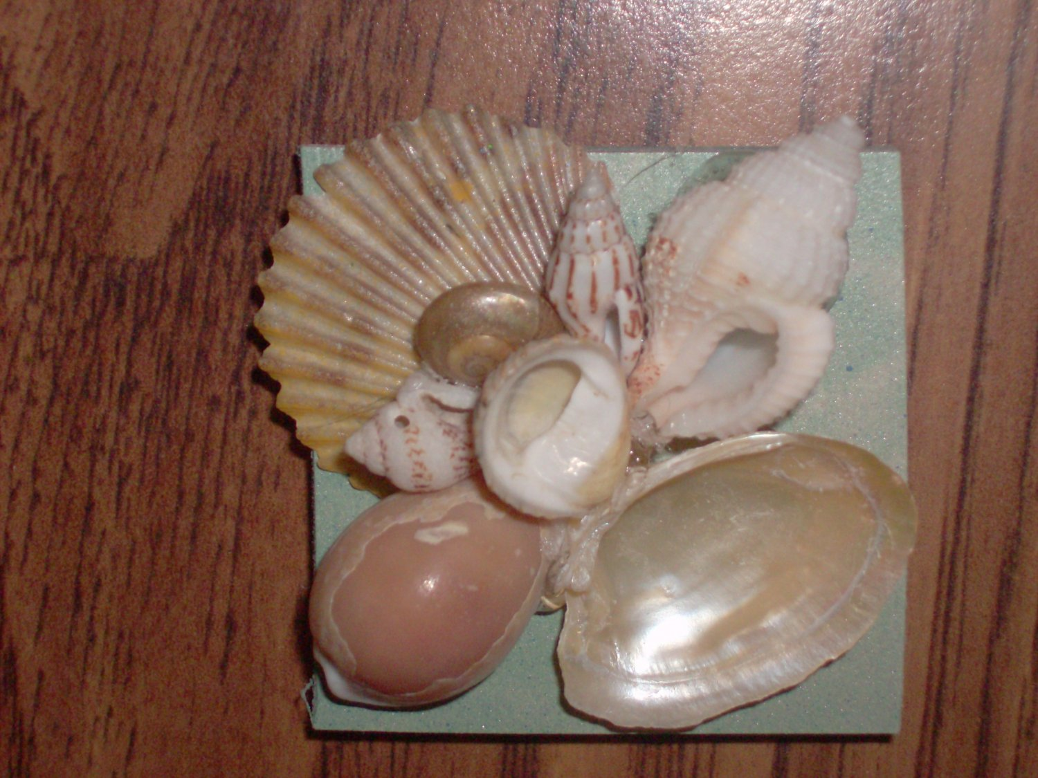 Magnet Teal Background with Natural Shells