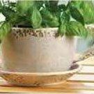 Teatime Delight Planter