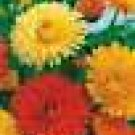 100 HEIRLOOM Pot Marigold  MIX  SEEDS