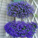 100 Variety Trailing Lobelia (SAPPHIRE TRAILING) Blue flower Seeds
