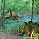 Nature Melissa 8.5 x 8.5