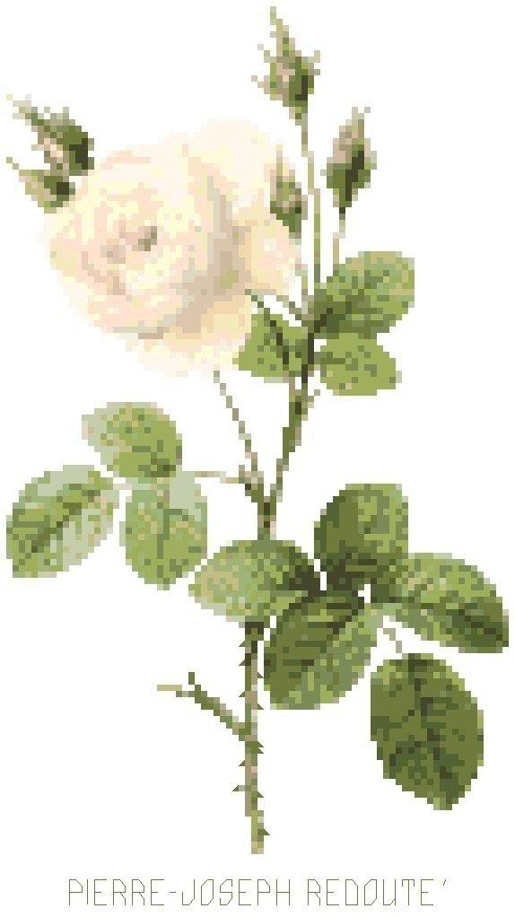 Redoute's White Moss Rose Pattern Chart Graph