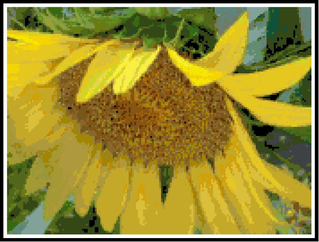Shy Sunflower Pattern Chart Graph