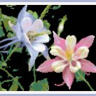 Columbine Pattern Chart Graph