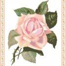 Petal Pink Rose Pattern Chart Graph