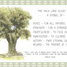 Holy Land Olive Tree Pattern Chart Graph