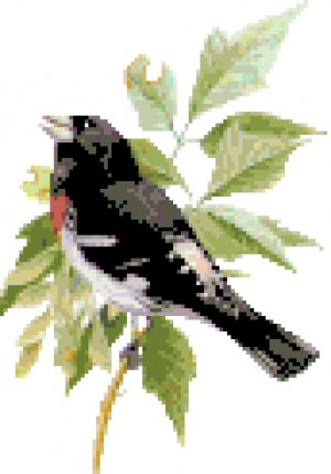 Rose Breasted Grosbeak Pattern Chart Graph