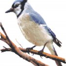 Blue Jay Pattern Chart Graph