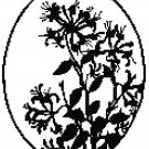 Monarda Blossoms - blackwork Pattern Chart Graph