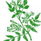 Jasmine Blossoms - greenwork Pattern Chart Graph