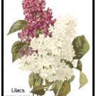 Red and White Lilac Blooms Pattern Chart Graph