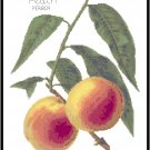 Peaches - Redoute Pattern Chart Graph