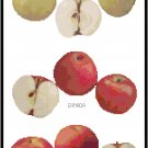 Apple Varieties Pattern Chart Graph