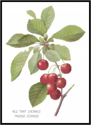 Red Tart Cherries by Redoute Pattern Chart Graph