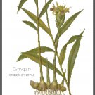 Ginger Spice Botanical Pattern Chart Graph