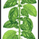 Basil Herb Pattern Chart Graph