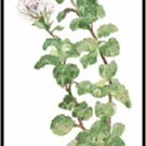 Oregano Herb Pattern Chart Graph