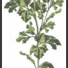 Parsley Herb Pattern Chart Graph