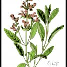 Sage Herb Pattern Chart Graph