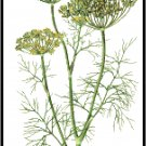 Dill Herb Pattern Chart Graph
