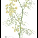 Fennel Herb Pattern Chart Graph