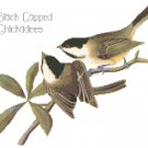 Audubon Black Capped Chickadees Pattern Chart Graph