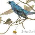 Audubon Indigo Bunting Pattern Chart Graph