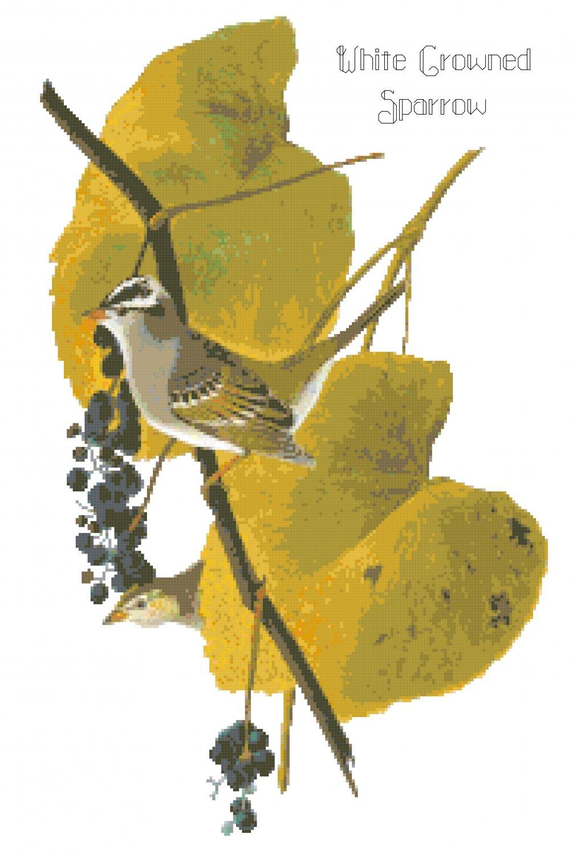 Audubon White Crowned Sparrow Pattern Chart Graph