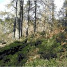 Cumbria Woodland Landscape Cross Stitch Pattern Chart Graph