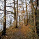 Woodland Footpath Landscape Cross Stitch Pattern Chart Graph